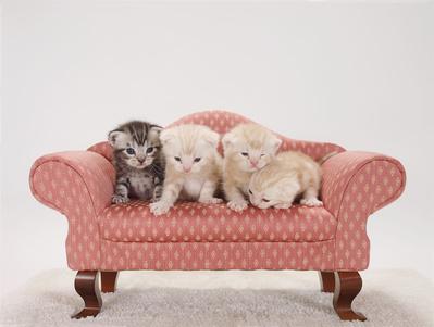 ペットのための遺言書