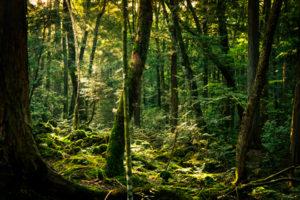 森林所有者届出